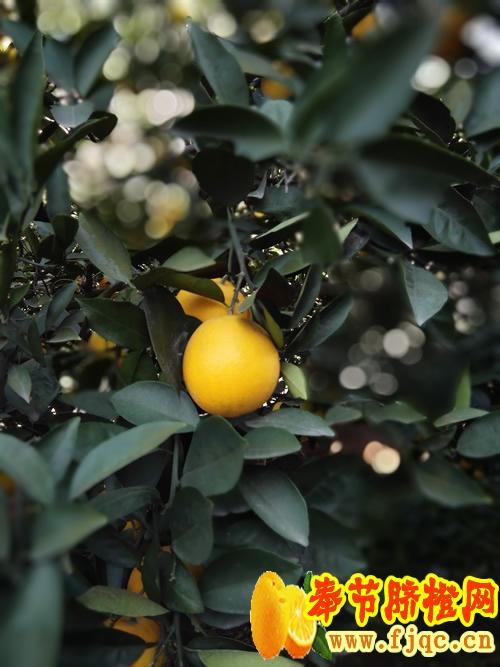 IMG_20110121_034442.jpg