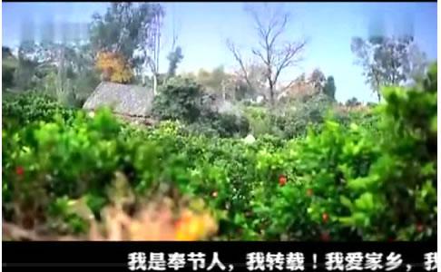 奉节脐橙宣传片